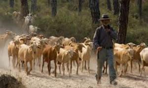 32 Ramat de cabres